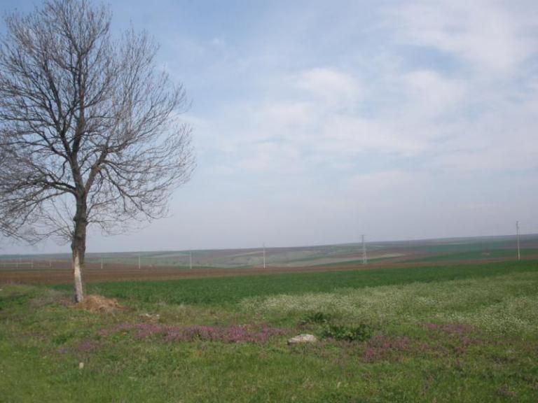 ечемик, зърнопроизводство, Agrozona.bg