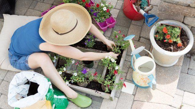 С какво да замените петунията: 4 красиви цветя, които искат по-малко грижи