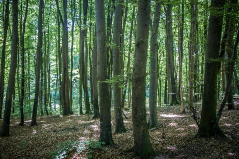 имоти, малки гори, Agrozona.bg