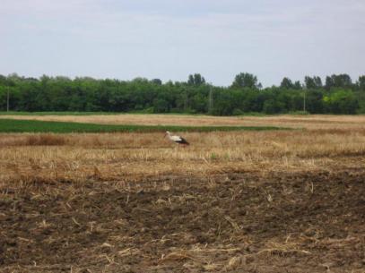 Съществено понижение на температурите: метеоролозите не предвиждат опасност за посевите