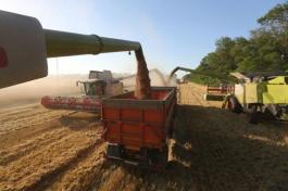 grain зърно