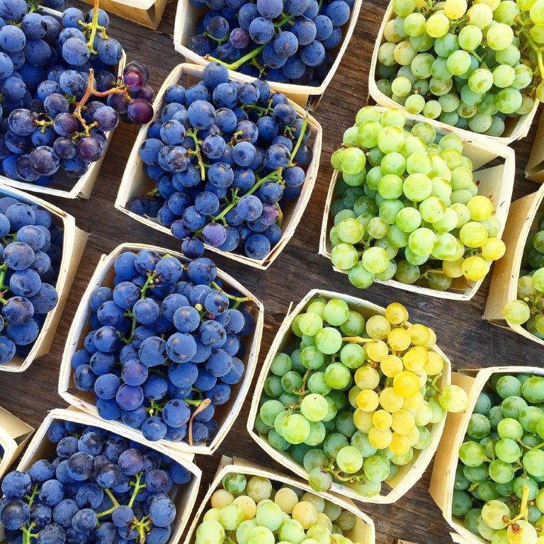 грозде, Европа, Agrozona.bg