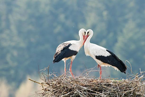 птици, щъркели, Agrozona.bg