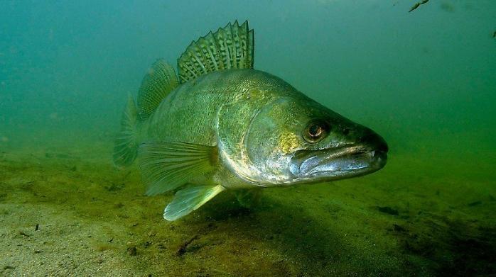 риболов, Agrozona.bg