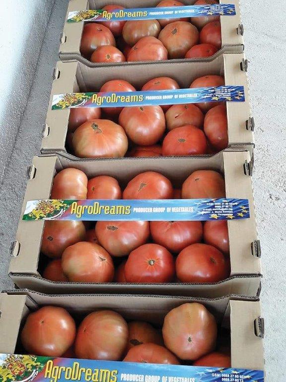 домати, производство, Agrozona.bg