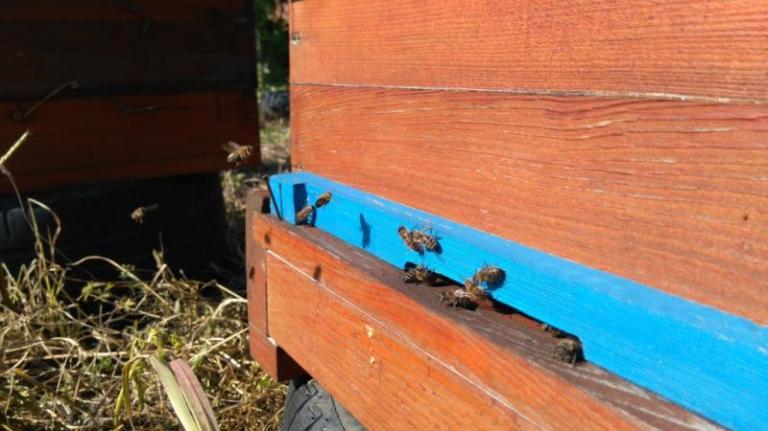 пръскане на ниви, пчели, Agrozona.bg