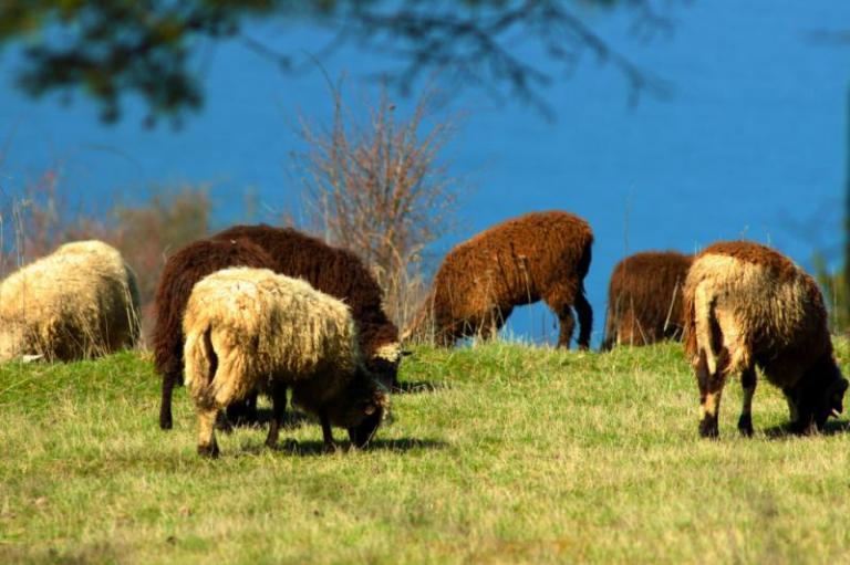 БАБХ, коза, Agrozona.bg