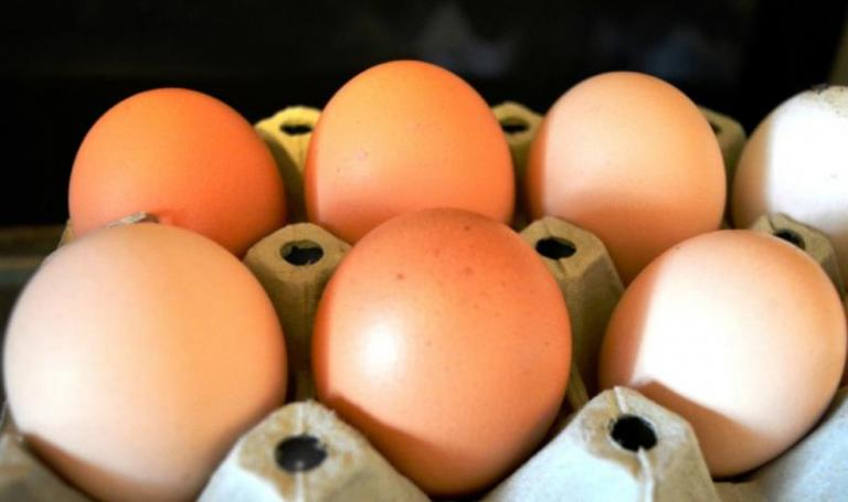 цени на яйца, Agrozona.bg