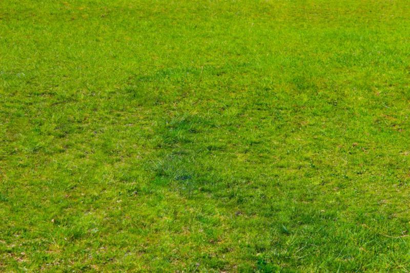 Посред суша: Как да запазите зелена моравата на двора в 9 стъпки