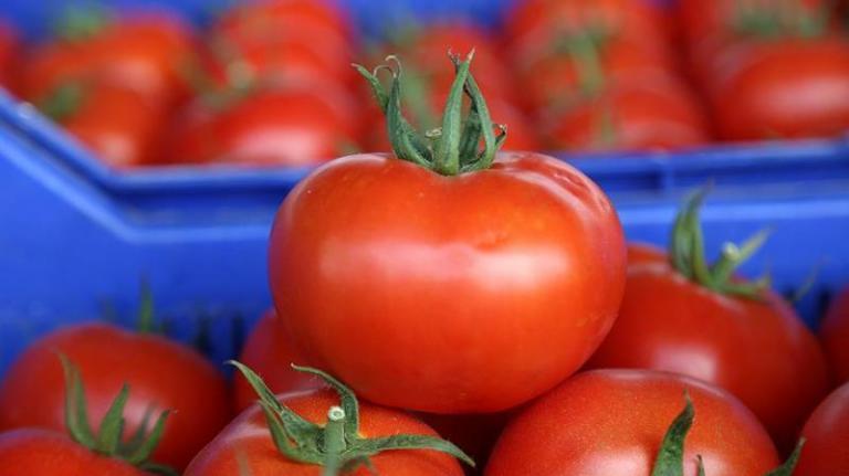 домати, оранжерии, Agrozona.bg