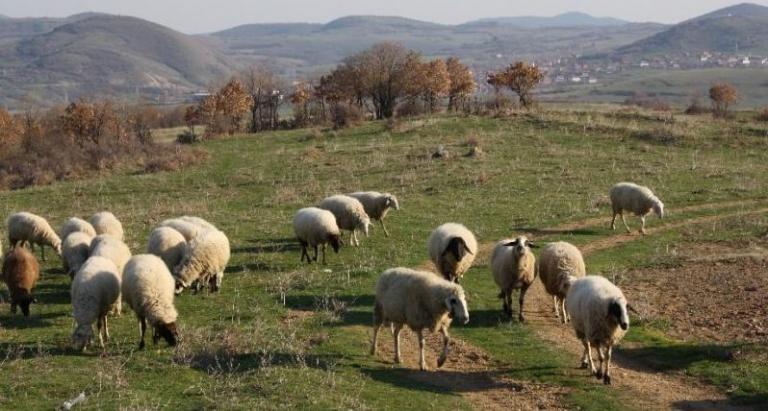 Гаранционен фонд за борба с градушките, кози, Agrozona.bg
