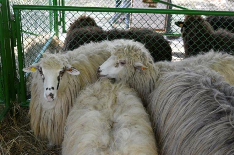 животни, инвентаризация, Agrozona.bg