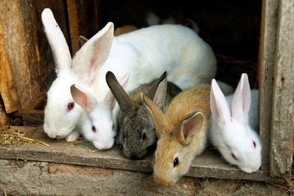 заешко месо, зайци, Agrozona.bg