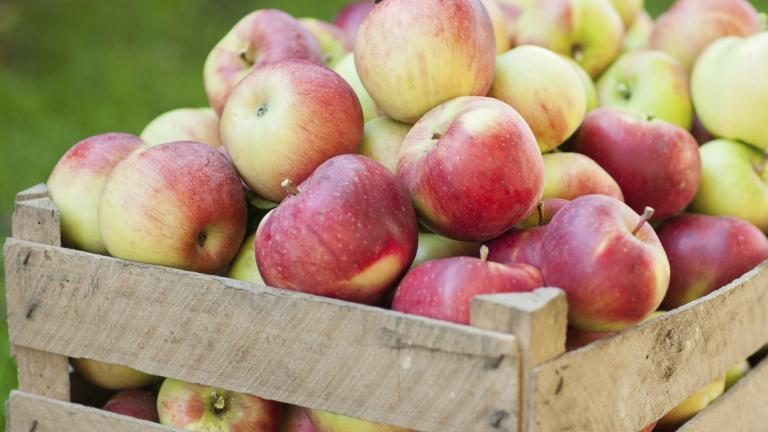 Полша, ябълки, Agrozona.bg
