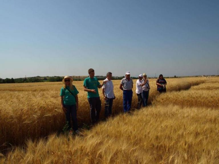 Инситтут по растителни генетични ресурси, пшеница, Agrozona.bg
