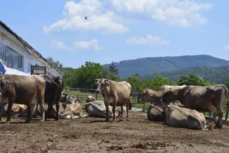 крави, Подкрепа, Agrozona.bg