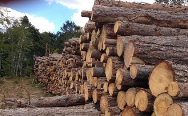 дърва за огрев, Кайлъка, Agrozona.bg