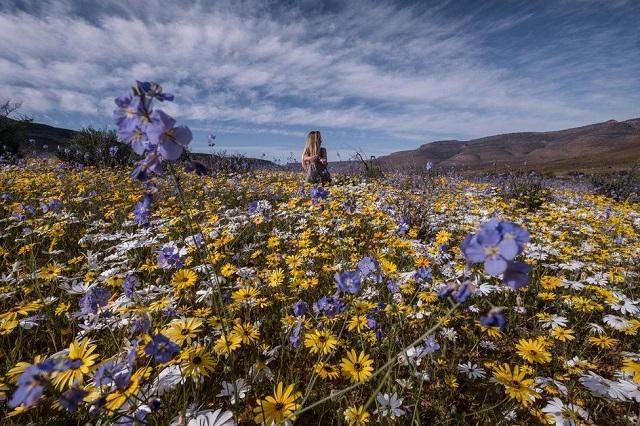 пустиня, цветя, Agrozona.bg