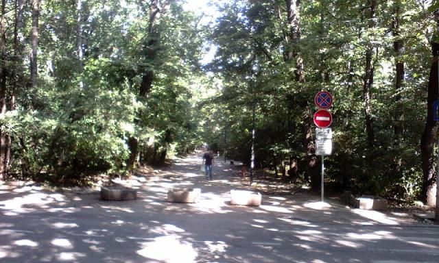 Борисова градина, дървета, Agrozona.bg