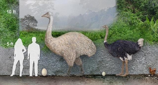 Гигантска птица, изчезване, Agrozona.bg