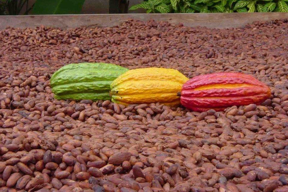 какао, натурален шоколад, Agrozona.bg