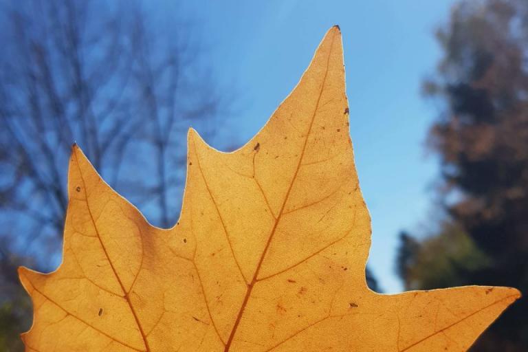 времето, ноември, Agrozona.bg