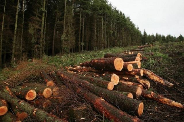 Дървопреработватели, електронни търгове, Agrozona.bg