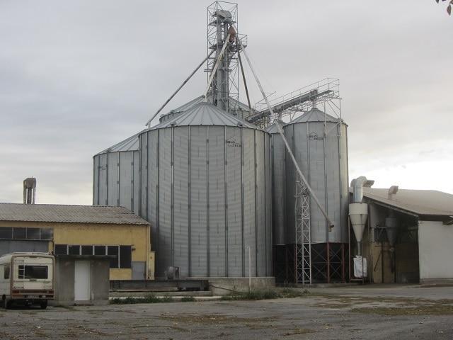 Петко, слънчоглед, Agrozona.bg