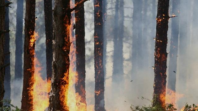 борова гора, пожар, Agrozona.bg