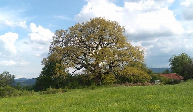 Дърво с корен 2018, Agrozona.bg