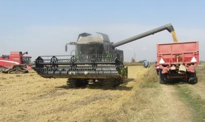 България отбелязва ръст в добива на всички зърнени култури през 2017 г.