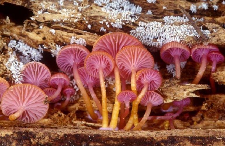 гъбни организми