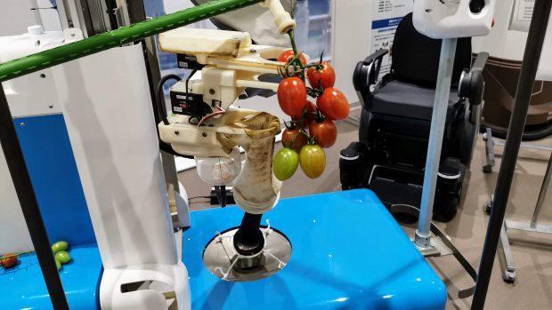 домати, роботи, Agrozona.bg