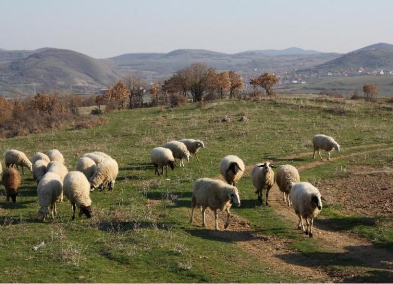 животновъди, Agrozona.bg