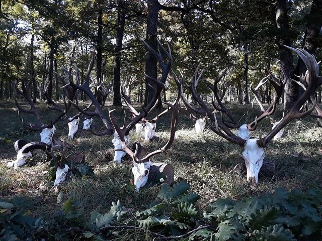 ловни стопанства, СИДП, Agrozona.bg