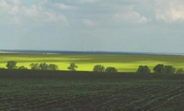 Добрички регион, покълване, Agrozona.bg