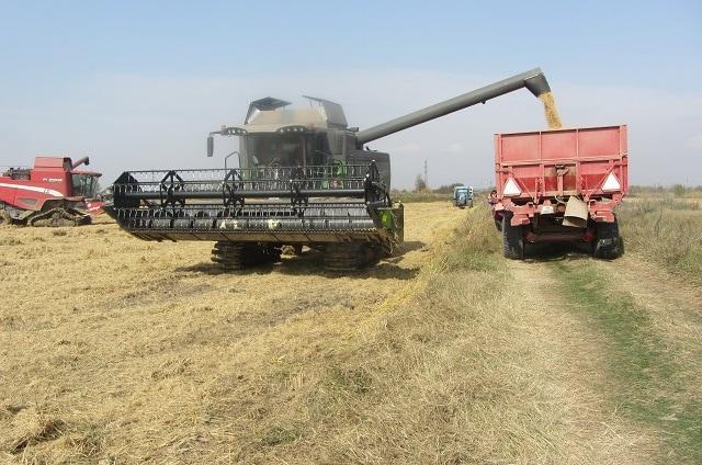 Добричкия регион, пшеница, Agrozona.bg