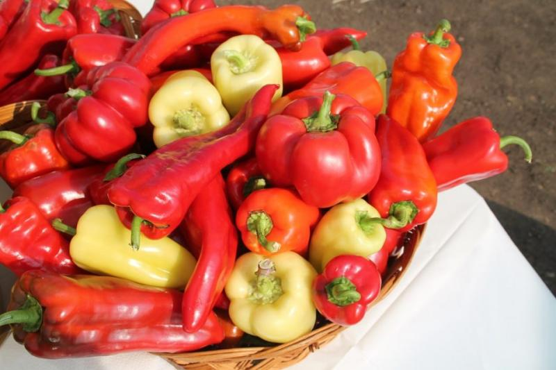 домати, зеленчуци, Agrozona.bg