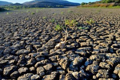 Небивалата суша в Югозапада удари земеделците
