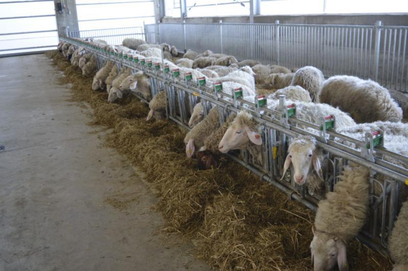 ЕС, животновъдство, Agrozona.bg