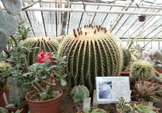 БАН, ботаническа градина, Agrozona.bg