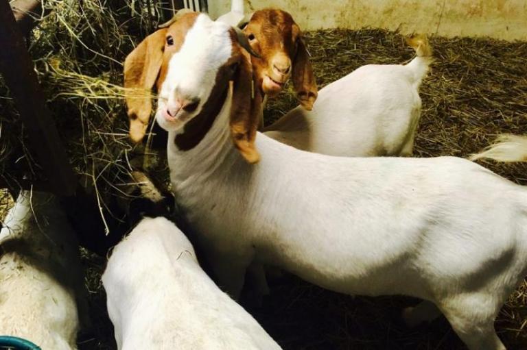 de minimis, животновъди, Agrozona.bg
