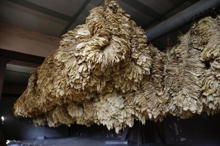 национална преходна помощ, тютюнопроизводители, Agrozona.bg