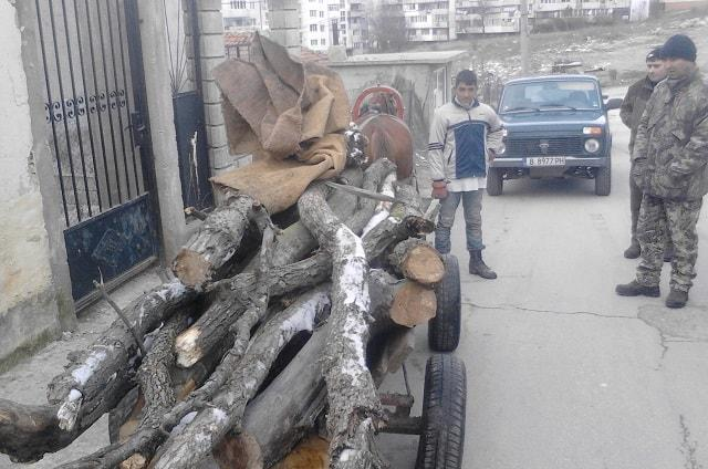 Варненско, дърва за огрев, Agrozona.bg