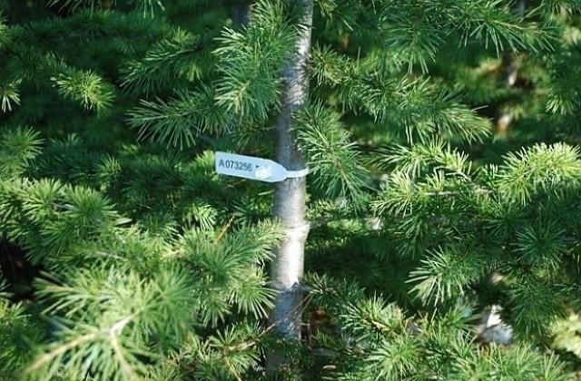 елхи, пластини, Agrozona.bg