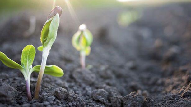 растителна защита, Agrozona.bg