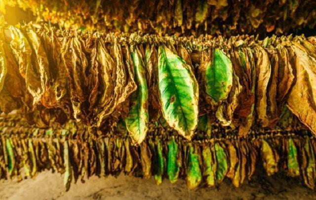 изкупуване, тютюн, Agrozona.bg