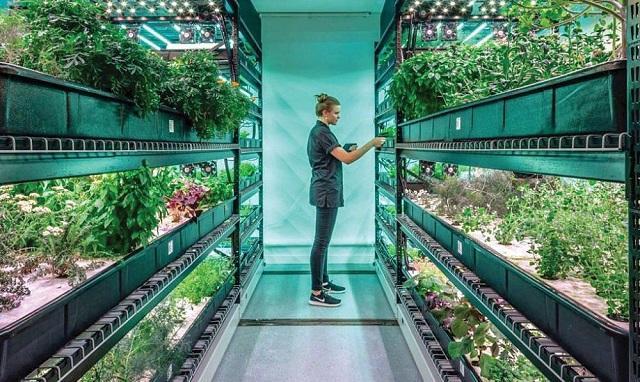 вертикално фермерство, Холандия, Agrozona.bg