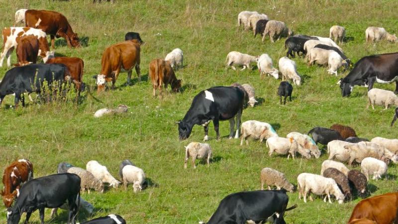 животновъди, карантина, Agrozona.bg
