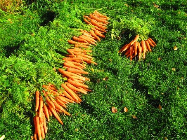 биопроизводство, зеленчуци, Agrozona.bg